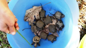 A Bowl Full Of Turtles